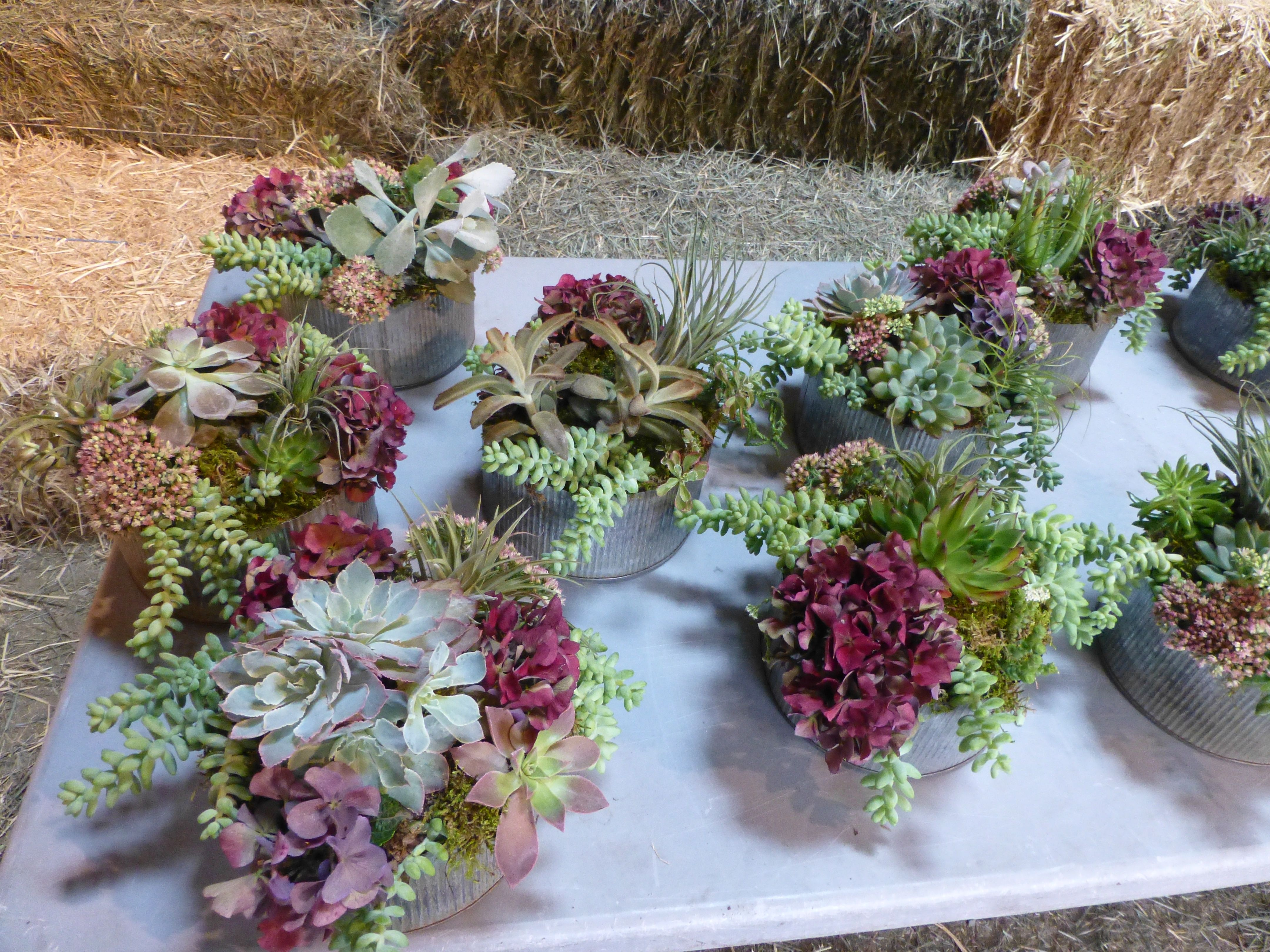 SUCCULENT & AIRPLANT WEDDING CENTERPIECES, late September