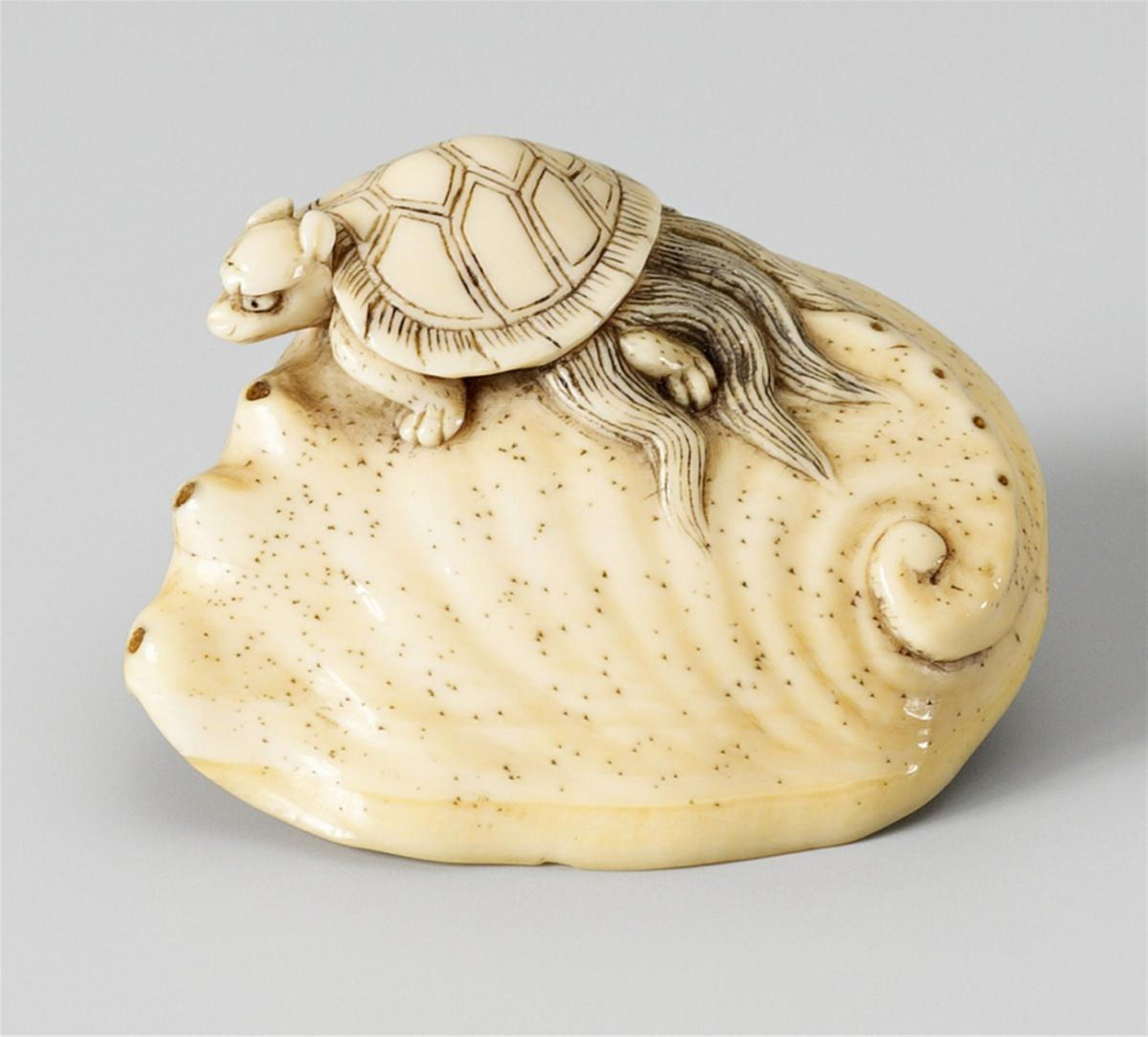 A large ivory netsuke of a minogame on an awabi. Early 19th century, Auktion 1044 Asiatische Kunst, Lot 720