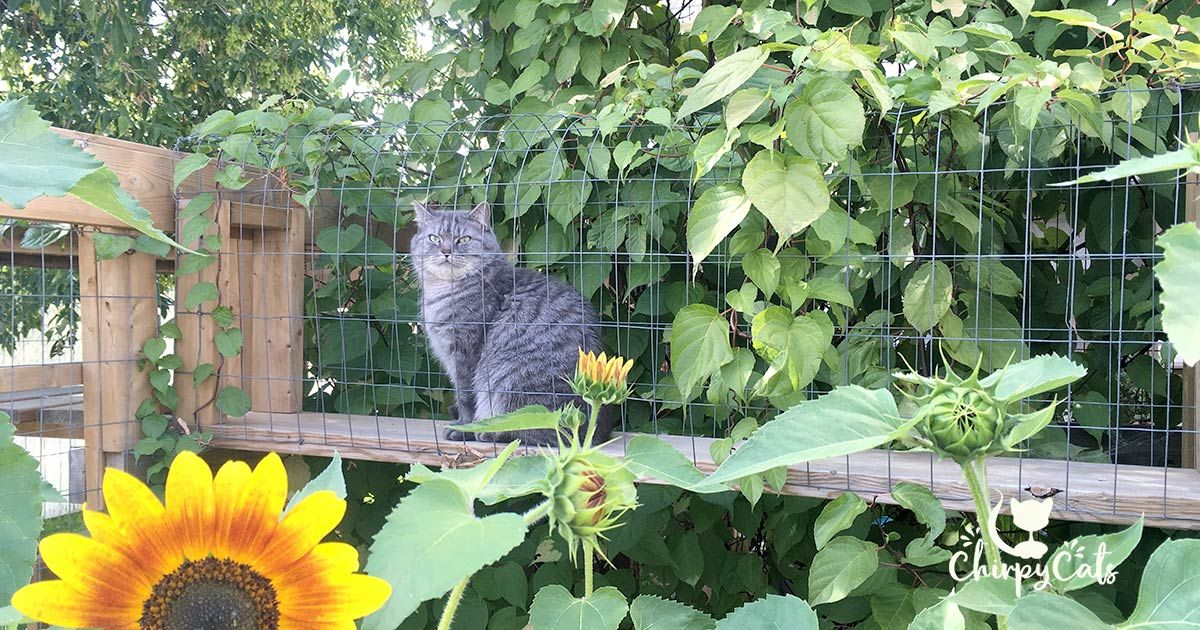How To Build A Catio Your Cat Will Love Cat Garden Cat Playground Outdoor Cat Safe Plants