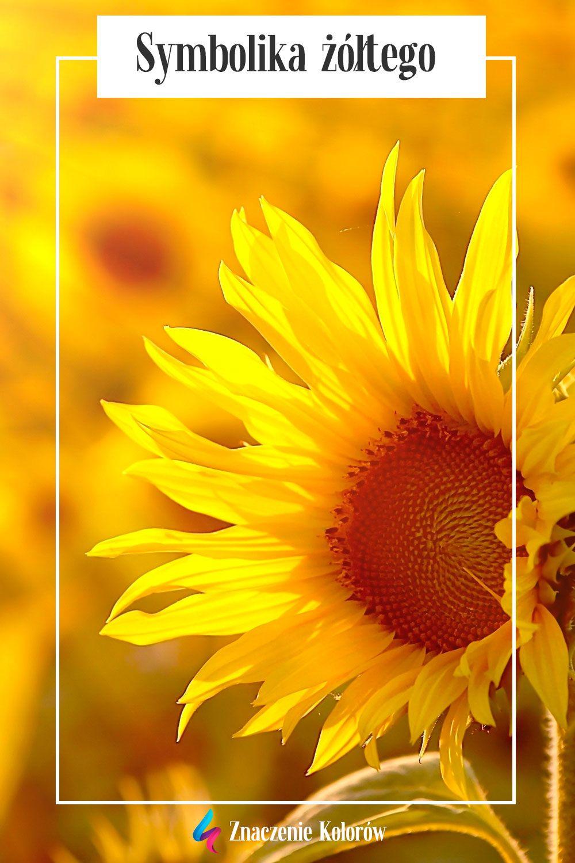 Znaczenie I Symbolika Koloru Zoltego Creative Art Theraphy Creative