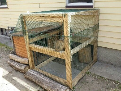 Outdoor Cat Enclosure Dog House 2x4s And Chicken Fencing
