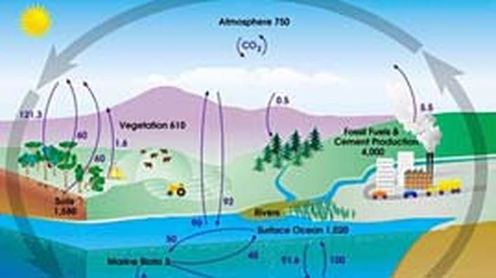 Cycle 2 Week 2 Carbon Cycle Is Illustration Shows Total