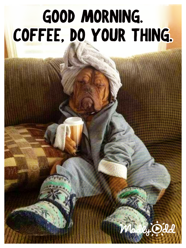 Good Morning Coffee Funny Animal Memes Funny Pictures Good Morning Funny