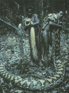 10 ular raksasa terbesar di dunia binatang binatang 10 ular raksasa terbesar di dunia binatang reheart Images