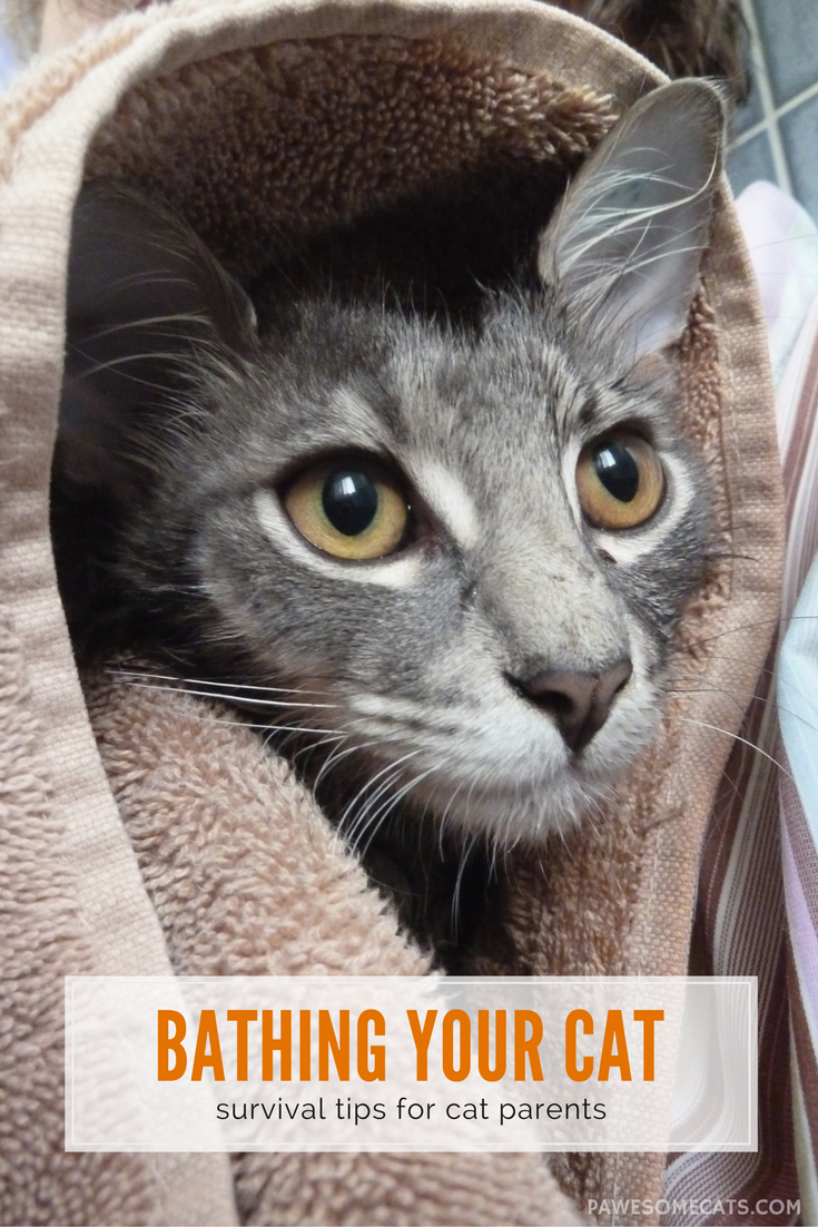 How To Survive Bathing Your Cat In 2020 Cat Care Cool Cats Cat Behavior