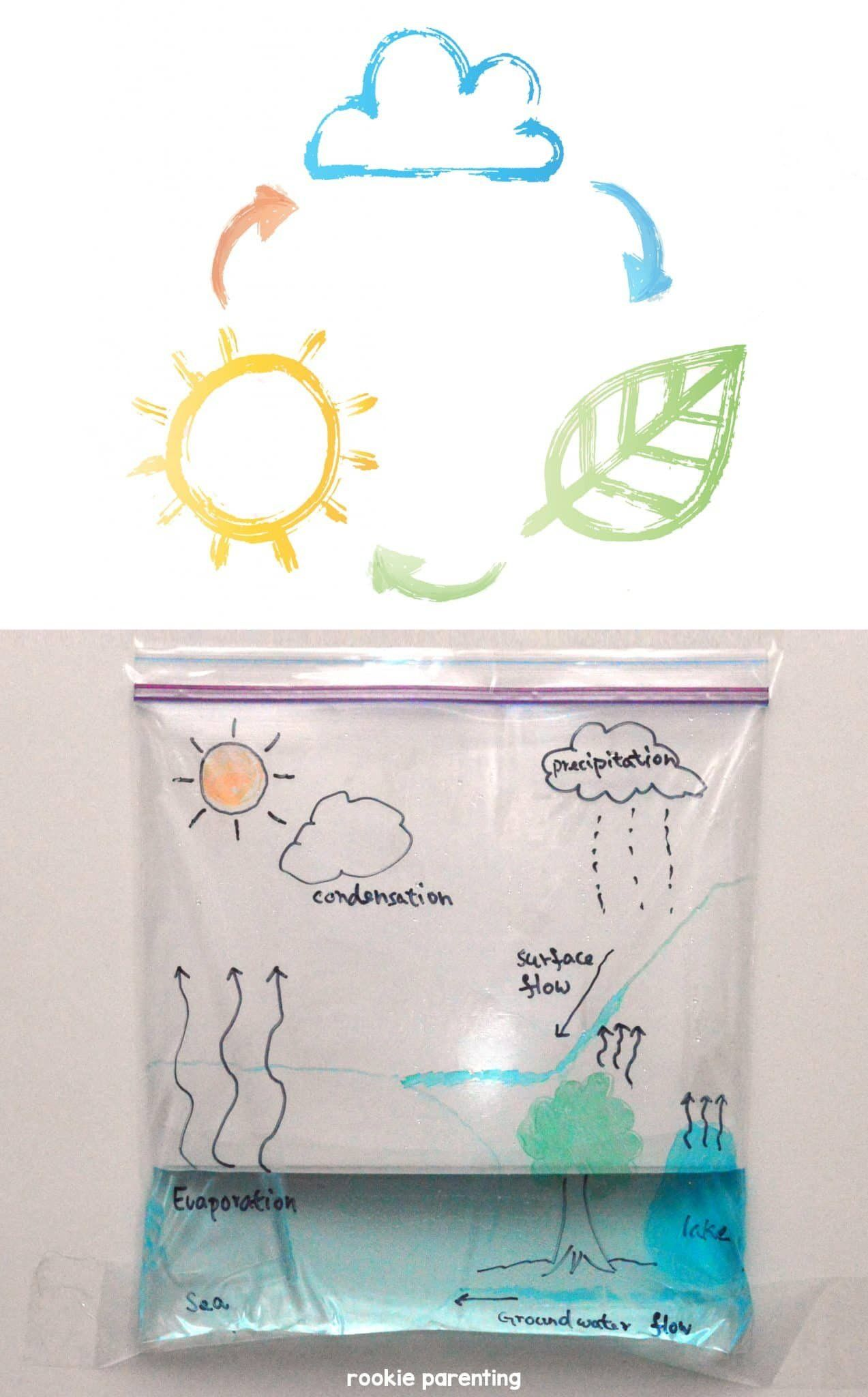 Water Cycle Worksheets 5th Grade Water Cycle Science Experiments Kids Science Projects Kindergarten Science