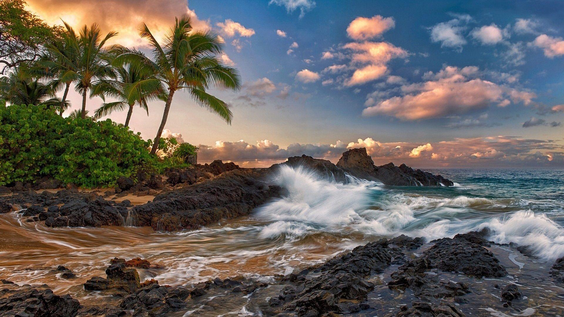 Maui Hawaii Calme Ocean Roches Des Palmiers La Plage Fonds D Ecran 1920x1080 Fonds D Ecran De Telechargement Paysage Plage Paysage Maui