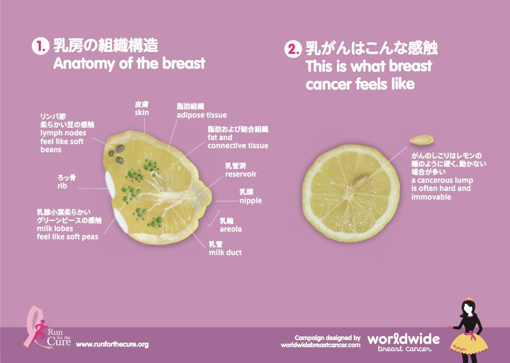 Breast Anatomy In Japanese And English From Run For The Cure