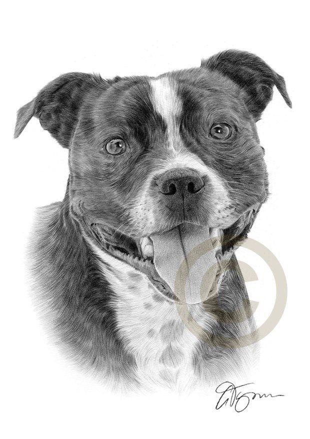Ten Great Dog Breeds For Allergy Sufferers Westie Puppies