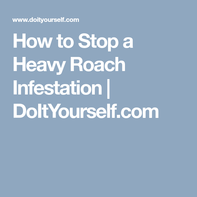 How To Stop A Heavy Roach Infestation Doityourself Com Roach Infestation Infestations Roaches