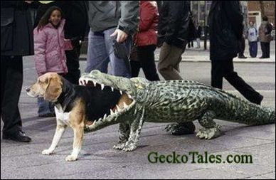 gator dog