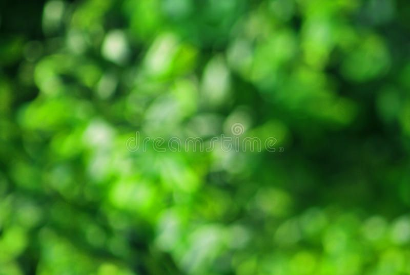 Nature Green Background Nature Fresh Green Blur Background Ad Green Nature Background Blur Fresh Ad Green Backgrounds Nature Images Blur Image