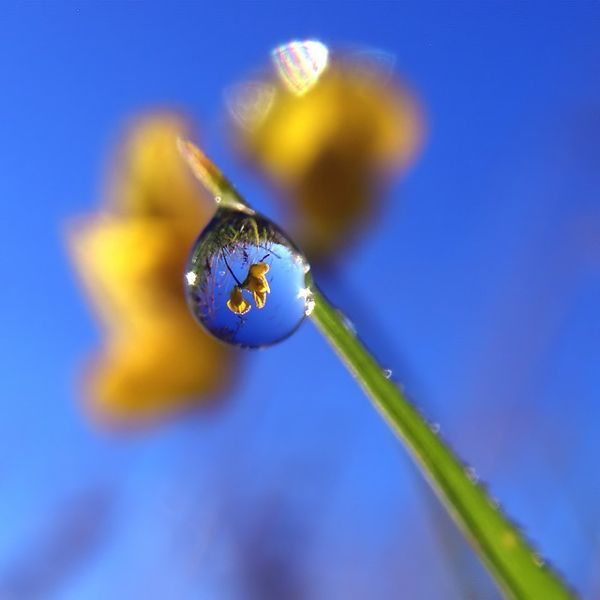 Photographer Evan Leeson Captures The Tiny Details In Our - Amazing images captured tinniest water droplets