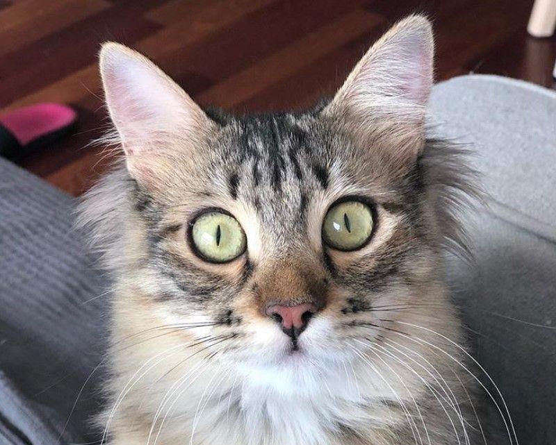 20 Best American Bobtail Cat Names | Best Cat Names
