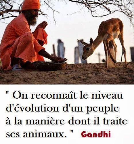 Citation De Gandhi Sur L Amour Des Animaux Animaux Citation