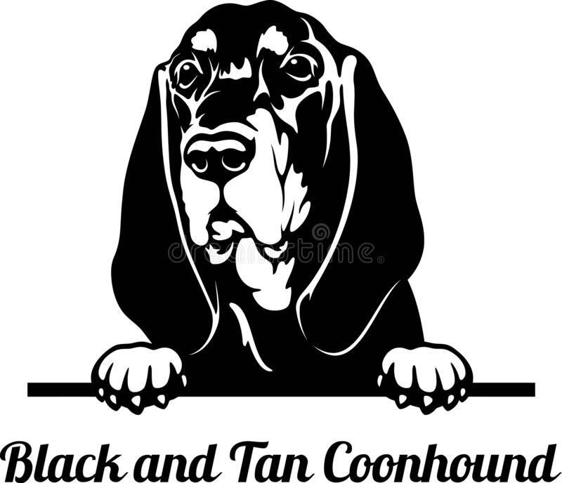 Peeking Dog - Black And Tan Coonhound Breed - Head