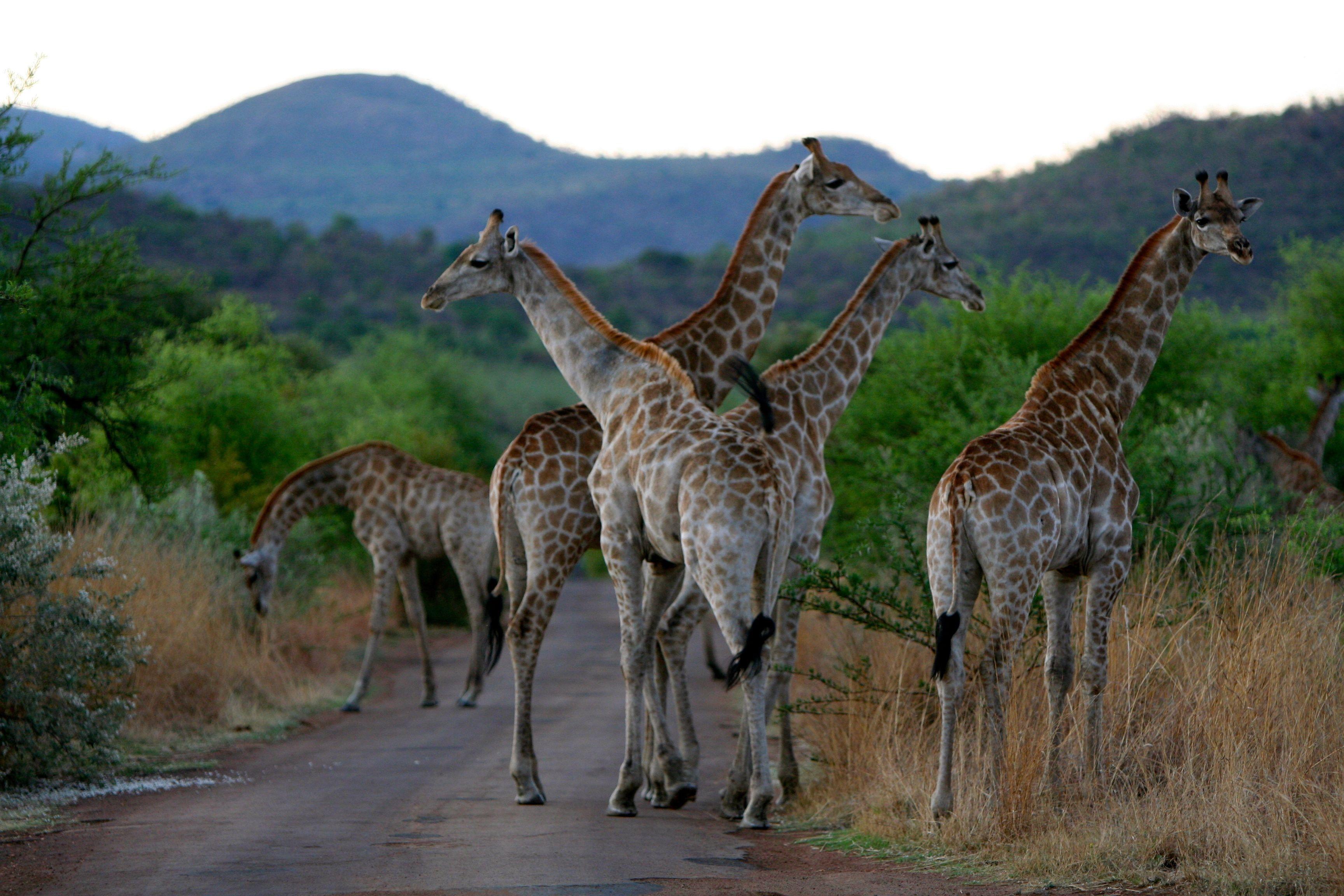 Pilanesberg South Africa 54