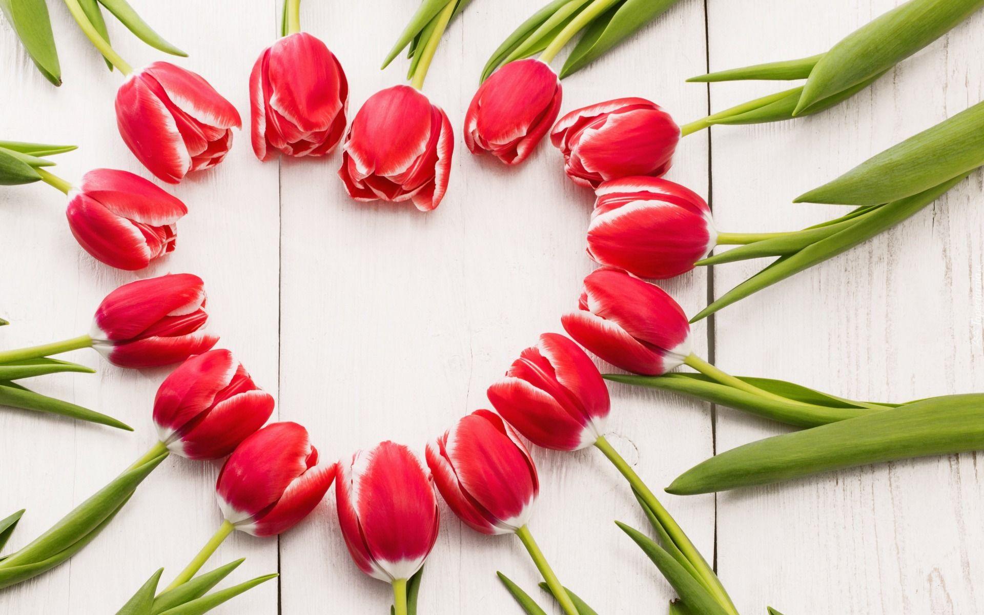 Kwiaty Tulipany Wiosna Serce Red Tulips Tulips Flower Images