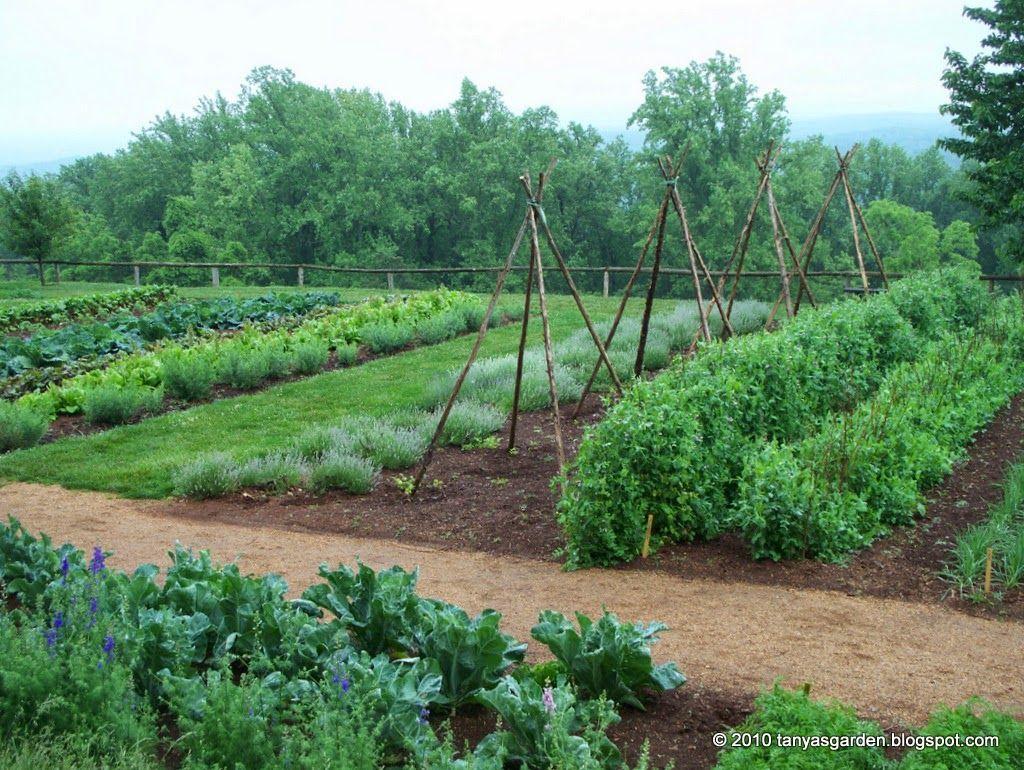 The Recreation Of The Monticello Vegetable Garden Began 640 x 480