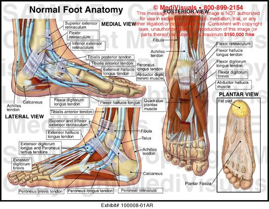 Anatomy Of The Foot Google Search Anatomy And Physiology