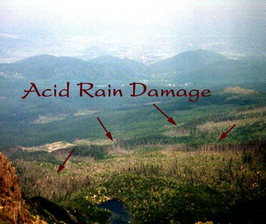 This is the effect of acid rain of the environment. | Acid Rain ...