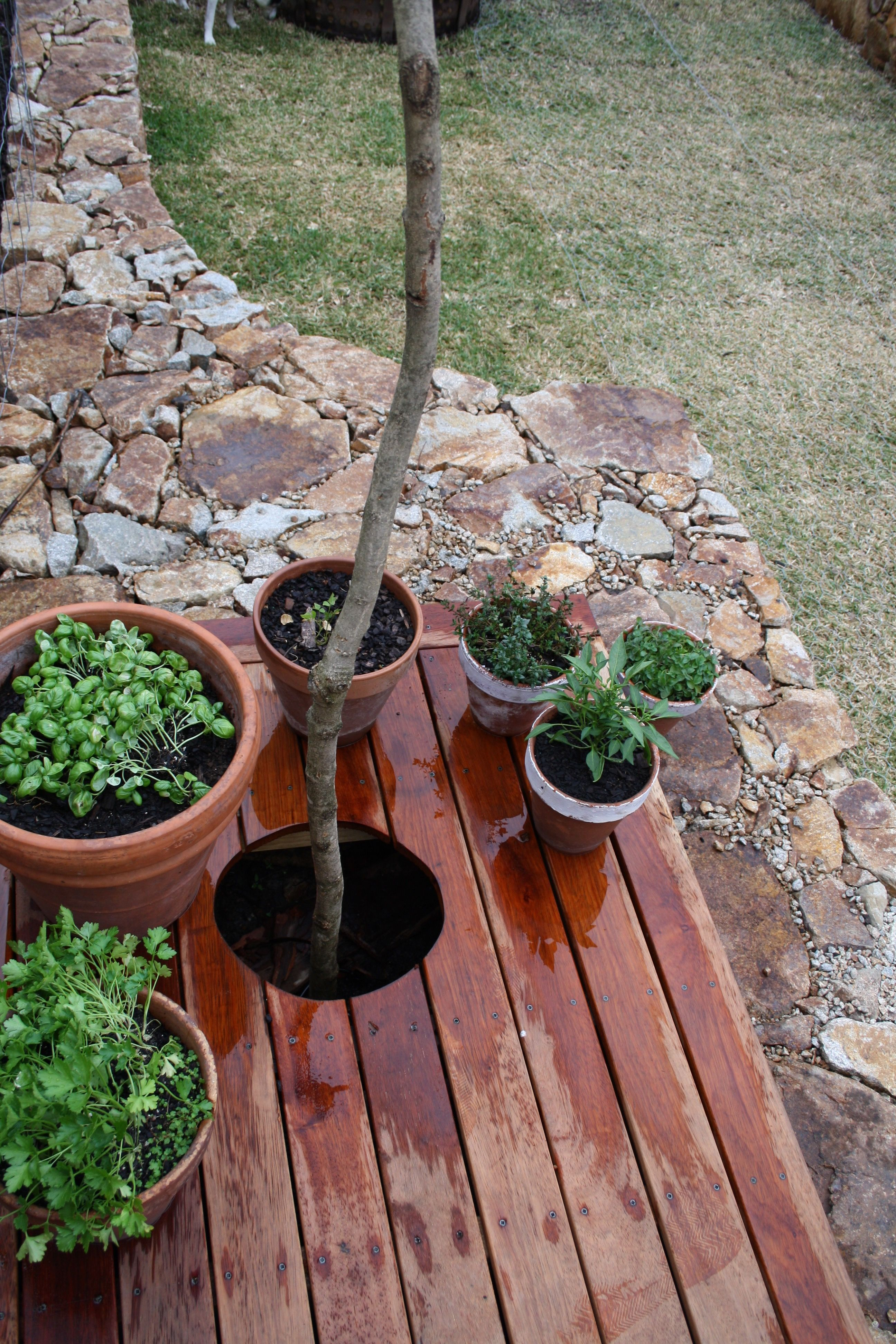 landscaping job st kilda Landscaping jobs, Plants, Garden