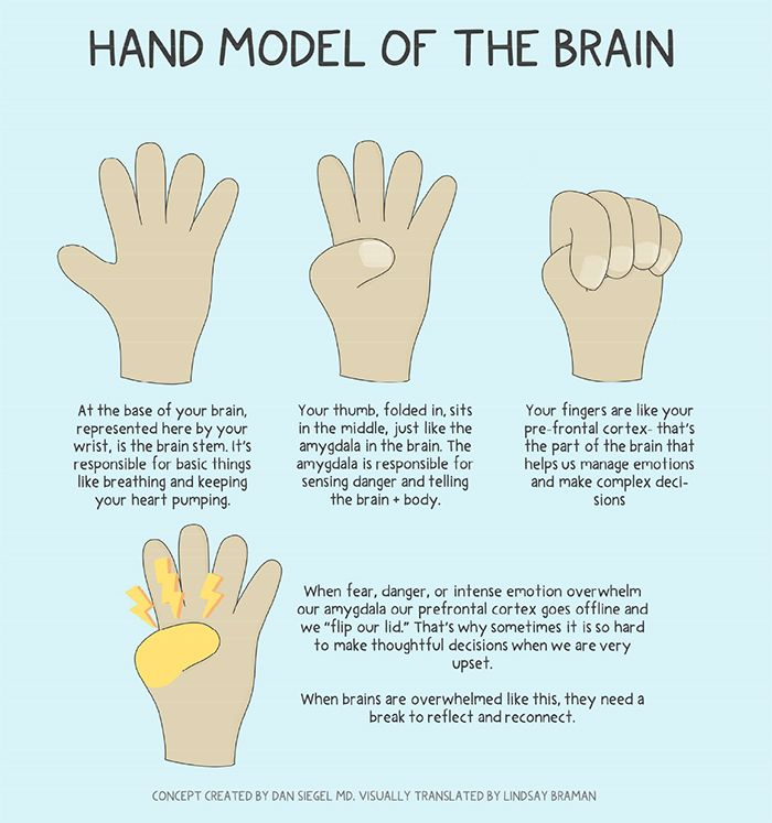 Learning About the Brain: Worksheets & Teaching Resources