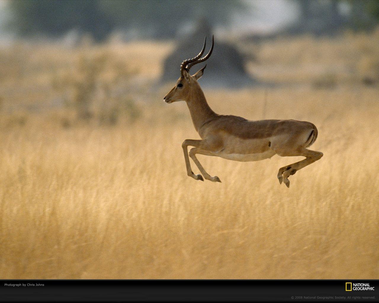 antelope tools