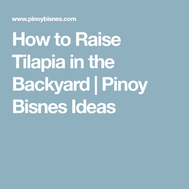 How to Raise Tilapia in the Backyard | Pinoy Bisnes Ideas ...