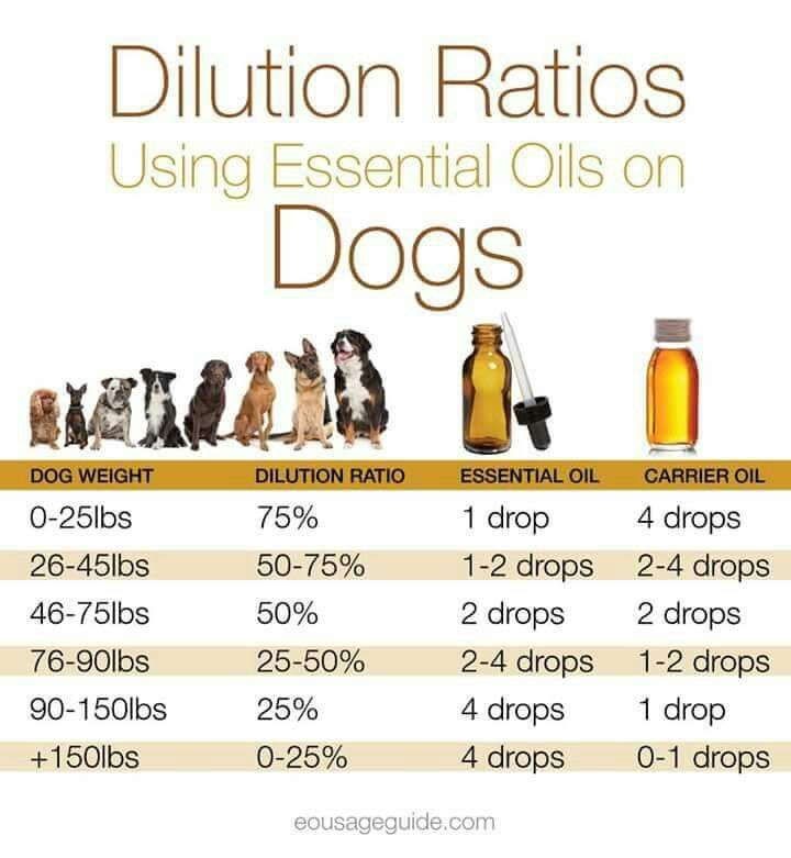 dilution rate of essential oils for dogs