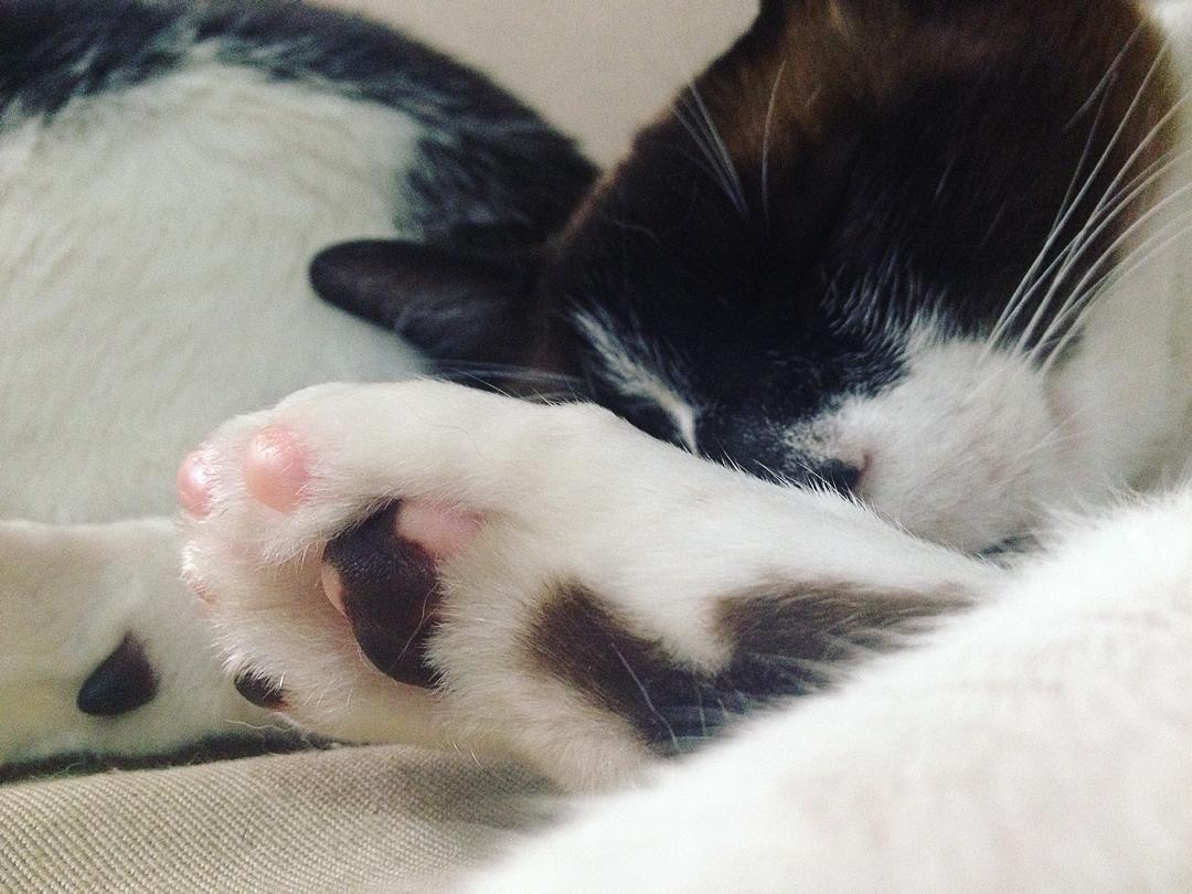 Almofadinha bicolor de Frederico  #instacat #instacatsgram #meow #catlove by barbarasalvan