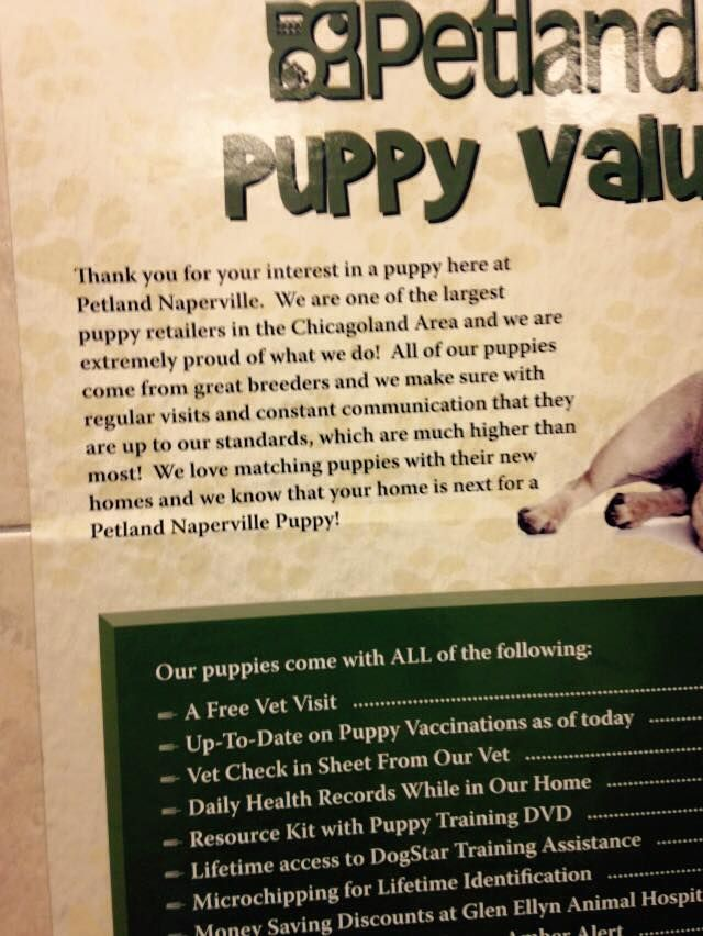 Naperville Petland And The Puppy Mill Puppies Puppy Mills Puppies Raining Cats And Dogs