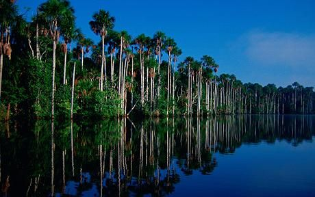 Amazon River Drainage Basin To Largest Rainforest In The World