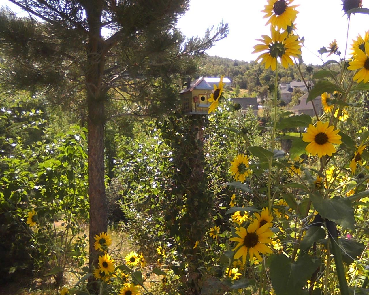 Sunflowers are always fun.