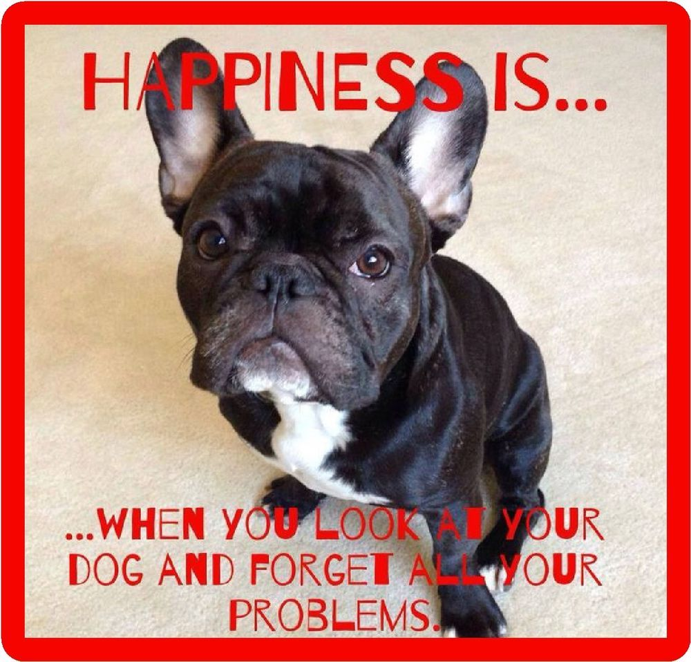 French Bull Dog Happiness Refrigerator Tool Box Magnet Gift Card Insert Ebay French Bulldog Funny French Bulldog Puppies Bulldog