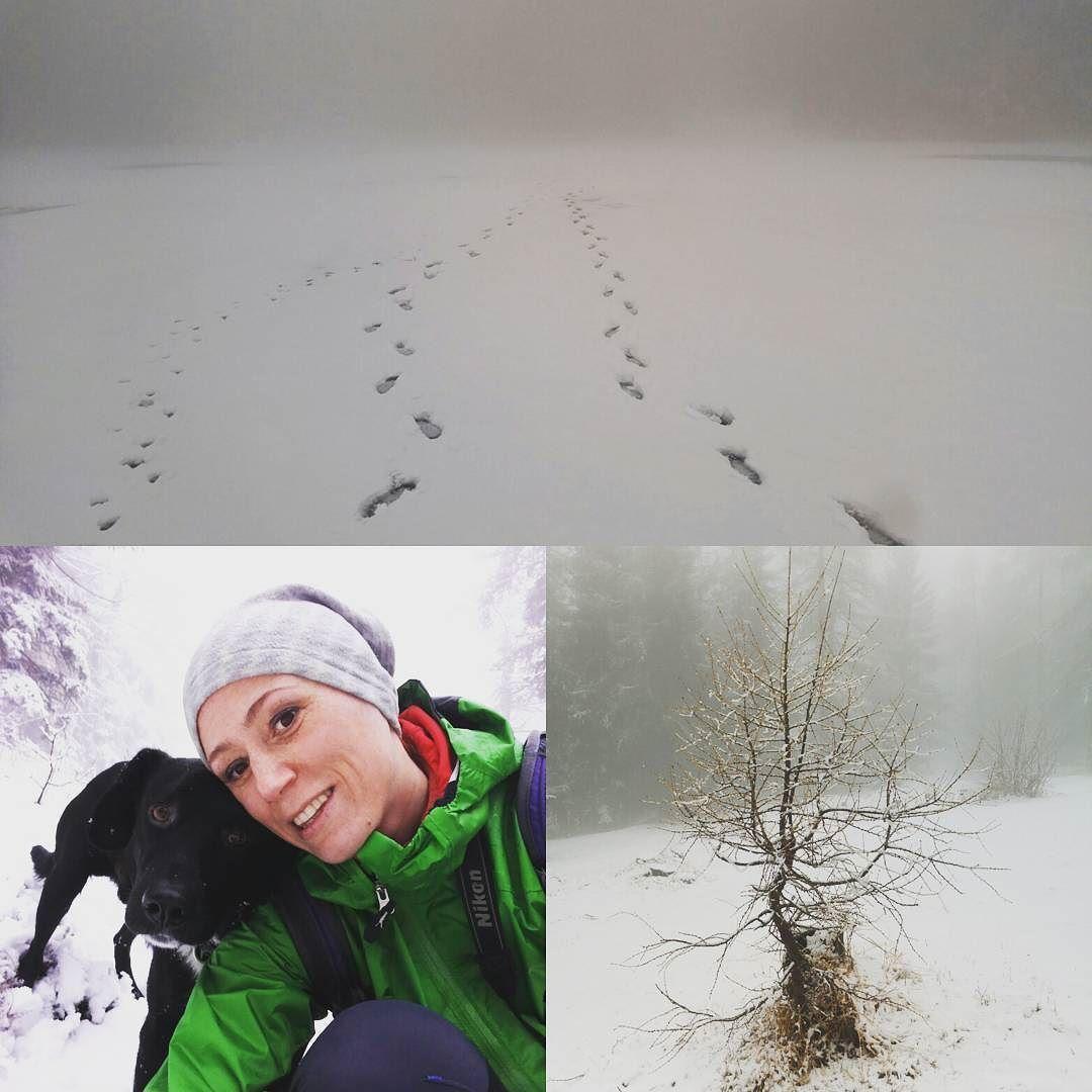 Finalmente la neve! #coldwinter #falchettolovers #falchetto #trentinodavivere #valdinona4zampe #valdinon #winter #trekking #natura #camminarefabene #mountains #lagoditret #lago