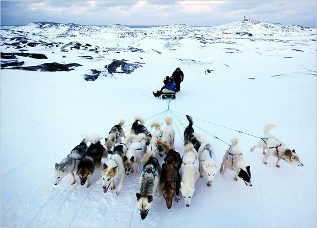 Inuit Sled Dogs   visit dsc discovery com   Sled Dogs ...