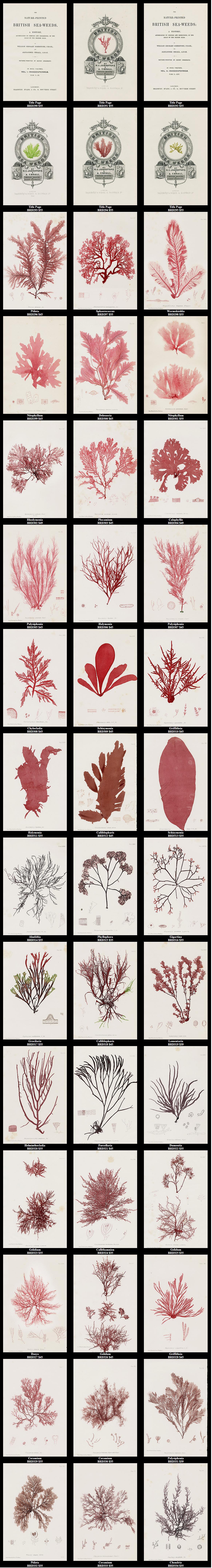 Pin de Valentina Romero en flora,fauna,anatomía | Pinterest ...