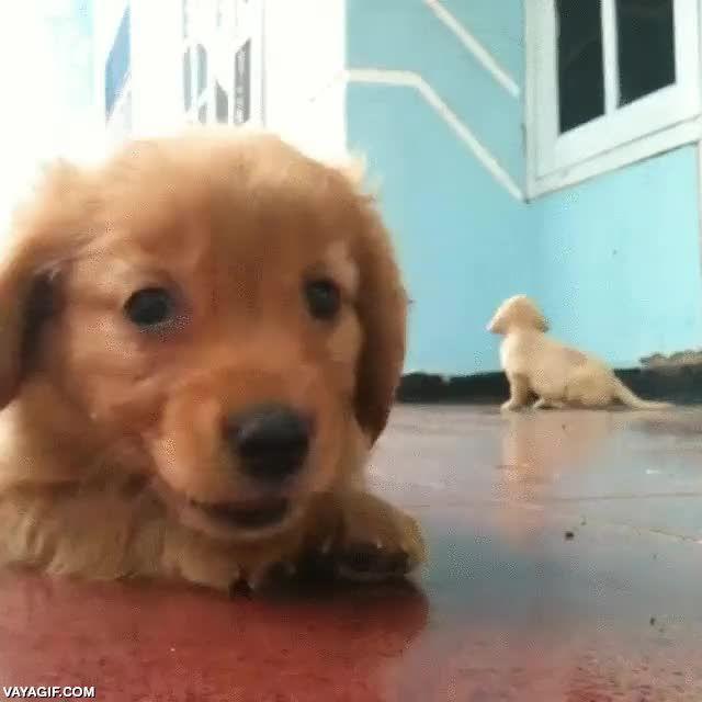 ¡No, no mires al otro, yo soy el más adorable, grábame solo a mí!