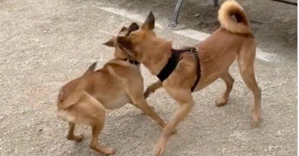 Shelter Pup Siblings Reunited At Dog Park In Sweet (And Totally Random) Chance Encounter