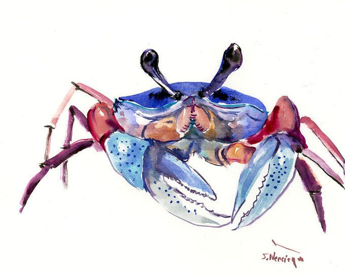Blue Crab 12 X 9 In Original Watercolor Sea World Animal Art