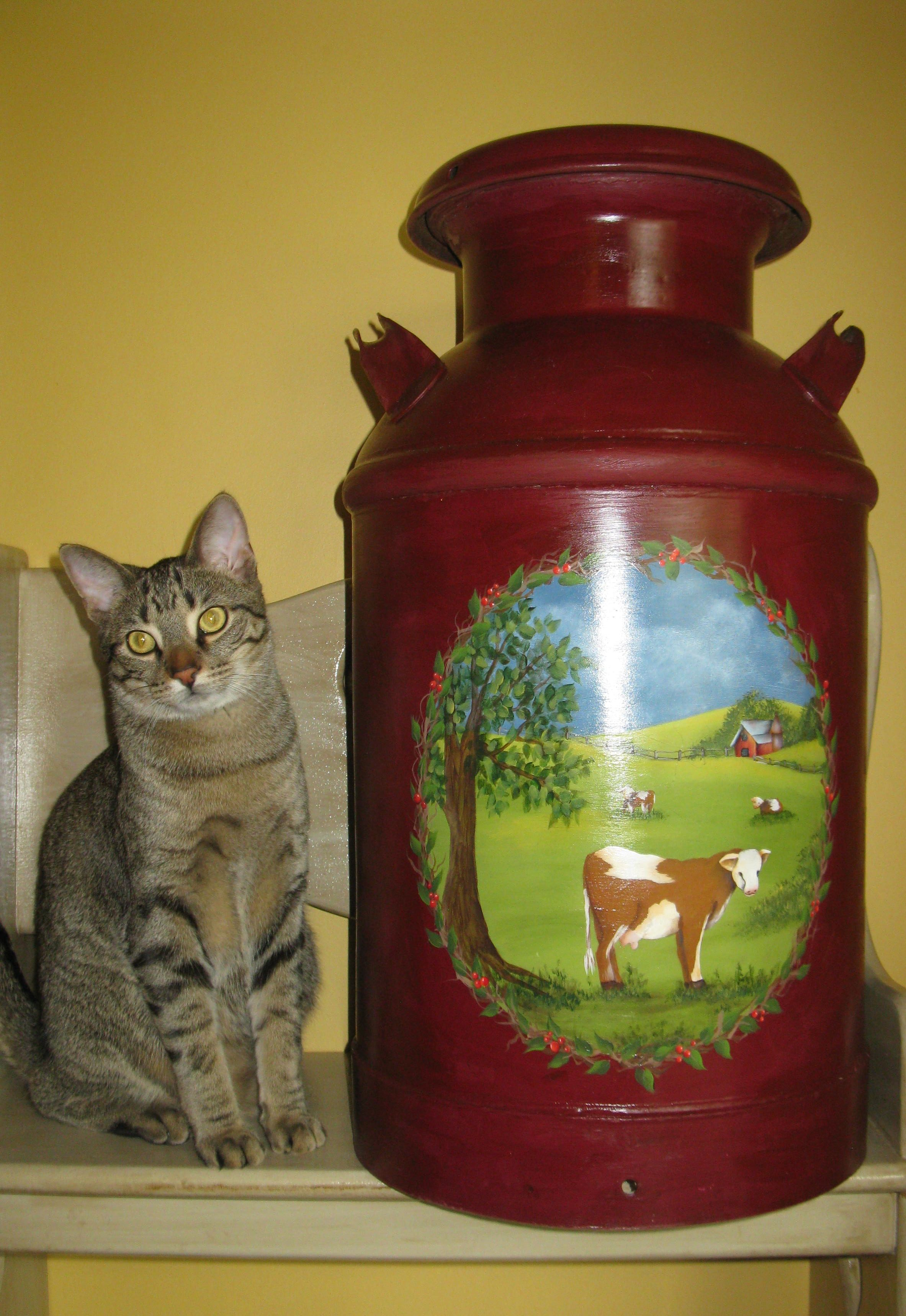 Painted Milk Cans | Painted Milk Can by Cindy Overbeek. My Cat Henry Thought He Needed to ...