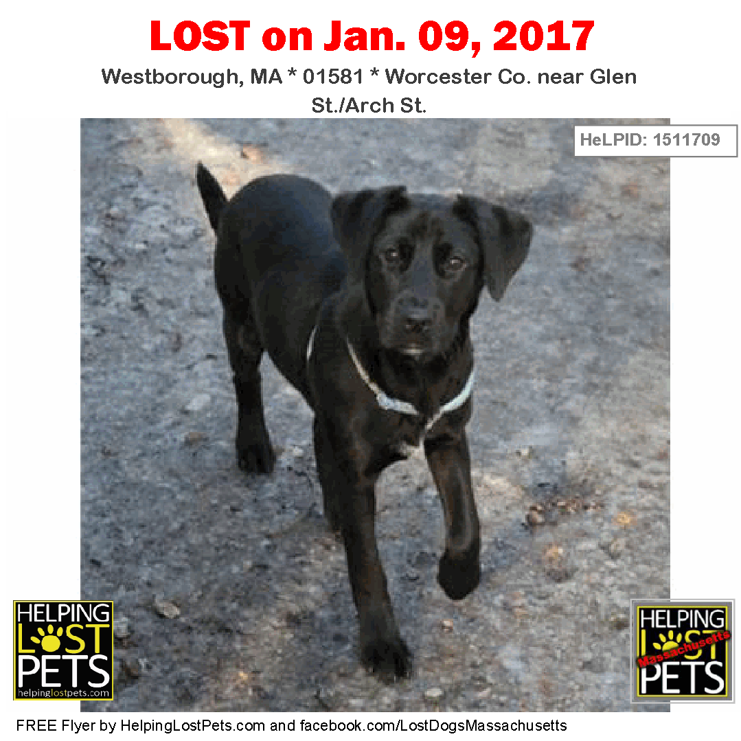 Lost Dogs Massachusetts Page Liked 23 Hrs Westborough Ma