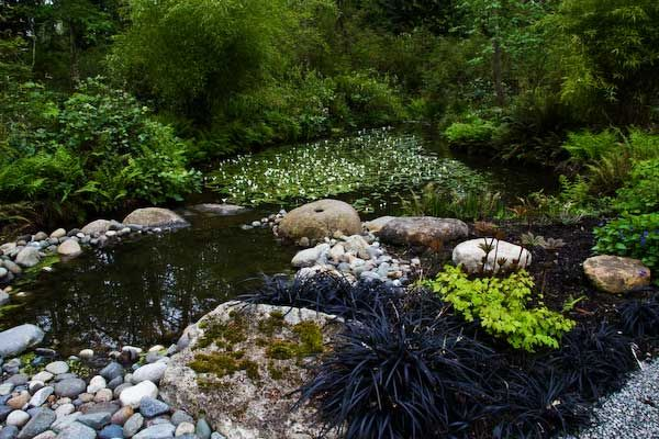 Natural forest pond by Plantswoman Design, www.plantswomandesig.com. Garden Design Planning | Landscape Construction Kitsap County | Plantswoman Design