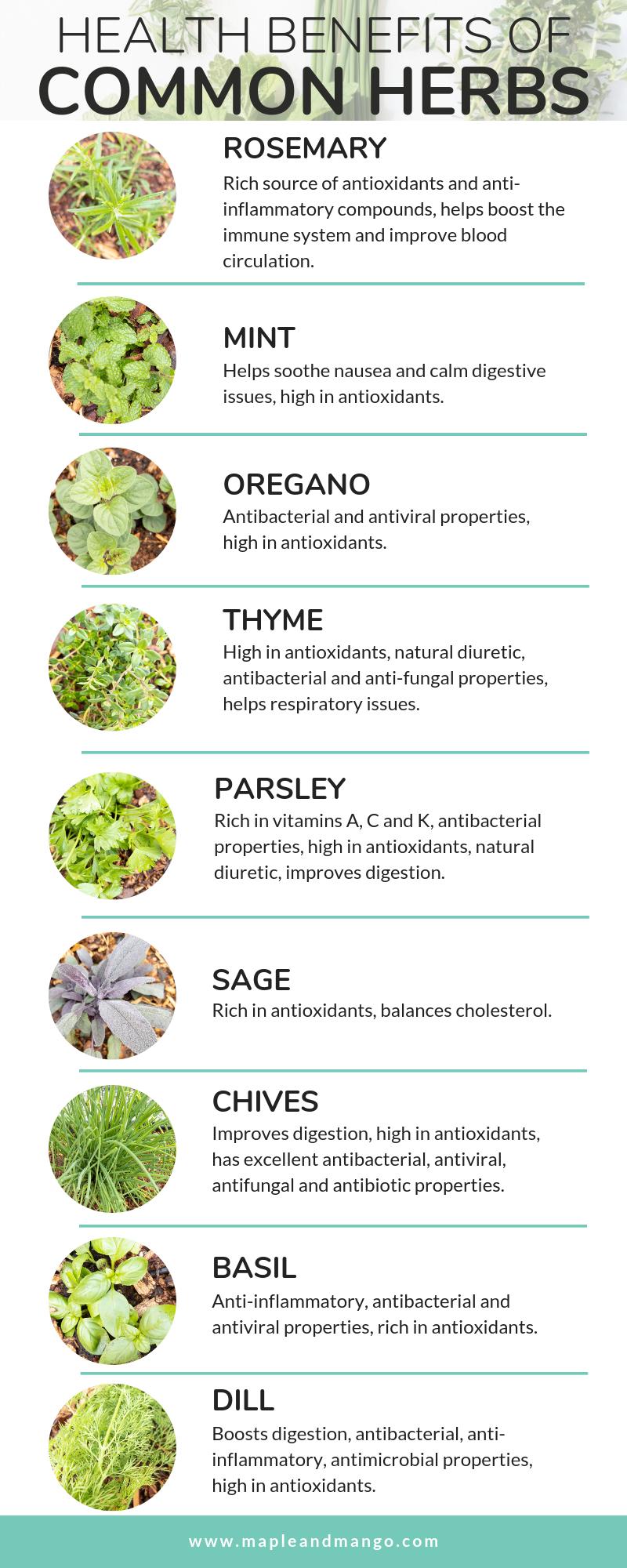 Growing a Herb Garden + Health Benefits of Herbs