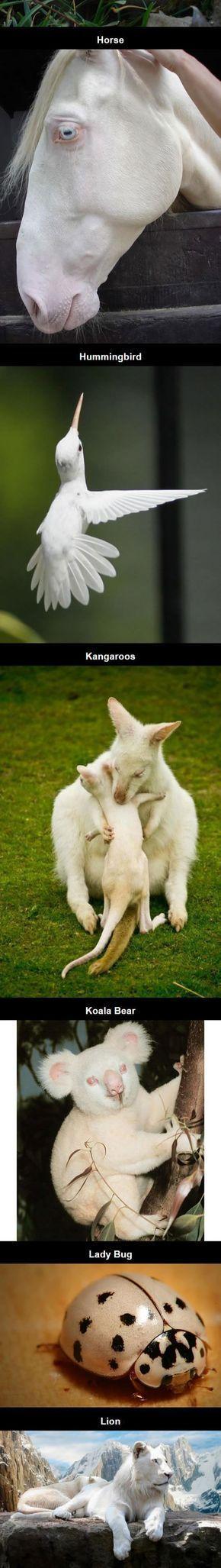 17 Rare Albino Animals,  #Albino #albinoanimalhorses #animals #Rare #albinoanimals