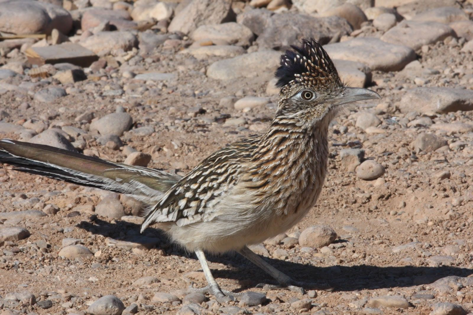 desert and animals Abc teachcom has an entire section on desert habitats with free desert themed worksheets, printables, word searches, early readers and animal and plant worksheets desert usa is a website full of so much information on deserts.