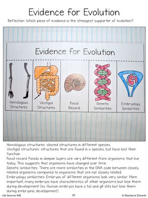 Evolution And Natural Selection Interactive Notebook Activities From Stephanie Elkowitz On Teachersnoteboo Biology Classroom Biology Lessons Homeschool Science