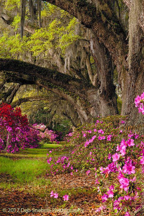 Charleston, South Carolina (With images) Beautiful