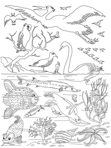 5th Day of Creation coloring page from Creation story